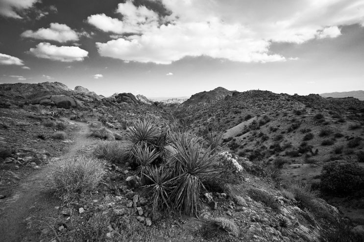 Panoramic of the Eagle Mountains, taken from the Lost Palms Oasis nature trail in the Sonoran (Colorado) Desert at Joshua Tree National Park, Calif., Wednesday, February 23, 2011. The four-mile trail leads from Cottonwood Springs to a secluded canyon filled with California fan palms.