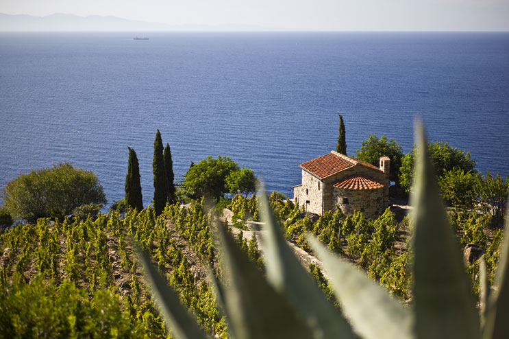 This winery between Chiessi and Colle d'Orano on Elba's wild West Coast is one of my favorite places on the entire island.
