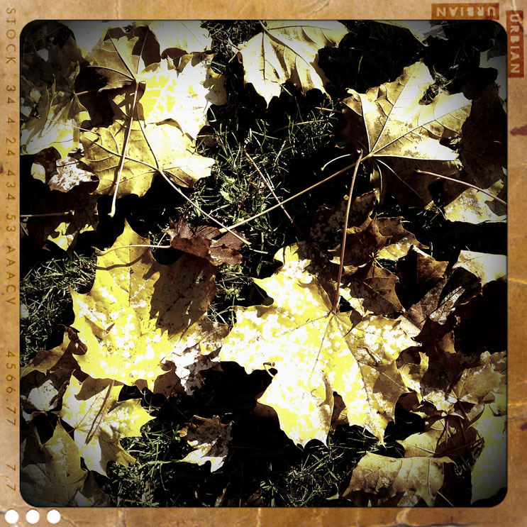 Maple leaves on the ground, Munich, Friday, October 28, 2011.