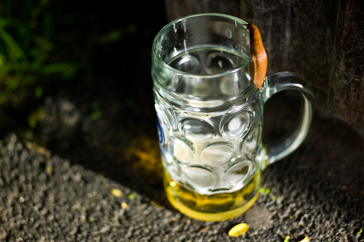 A slug crawls into an abandoned beer mug during the Kocherlball, a traditional Bavarian dance at the historic Chinese Tower (Chinesischer Turm) beer garden in Munich's city park Englischer Garten, Sunday, July 15, 2012.