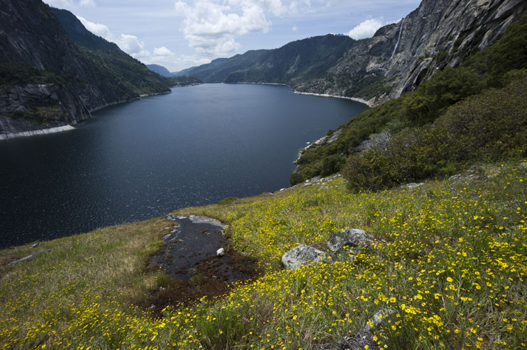 A sea of wildflowers grows above Hetch Hetchy Reservoir along the Rancheria Falls trail at Yosemite National Park, May 23, 2011.