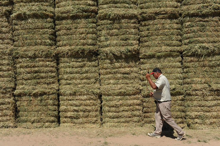 David Dechant, a Fort Lupton, Colo., farmer, takes samples from his new Alfalfa hay harvest for analysis Thursday, June 16, 2011.