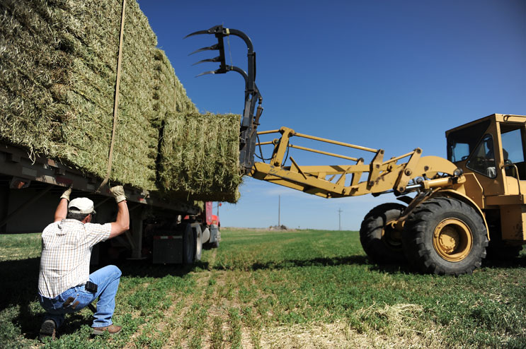 Larry Williams, left, owner of J&L Life Stock in Colorado Springs, and David Dechant adjust a load of Alfalfa hay bales on William's truck Thursday, June 16, 2011. Williams bought the hay from Dechant's Fort Lupton farm as forage for his dairy cows.