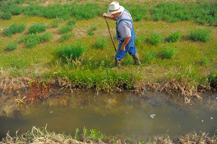 """Len Pettinger opens holes on the sides of a gravity irrigation ditch to divert water onto one of the Alfalfa hay fields on his farm in Brighton, Colo., Thursday, June 30, 2011. """"It's a very sad, sad, sad, sad commentary,"""" Pettinger said about the recent State Supreme Court ruling affecting the amount of water farmers in the area can use. """"All I wanted to do is hang on to pass it on to the family. But what's there going to be to pass on now?"""""""