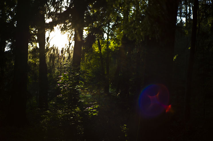 The sun breaks through the canopy of a forest in the Kellnau in Abensberg, Germany, Sunday, October 16, 2011.