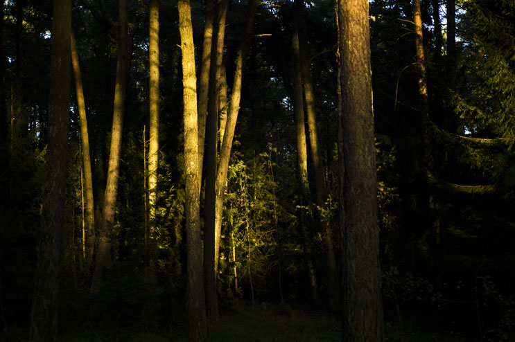 The last sun rays of the day break through the canopy into the forest in the Kellnau in Abensberg, Germany, Sunday, October 16, 2011.