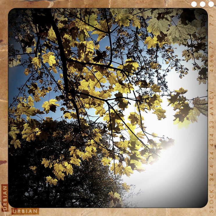 October sun on a maple tree, Munich, Friday, October 28, 2011.