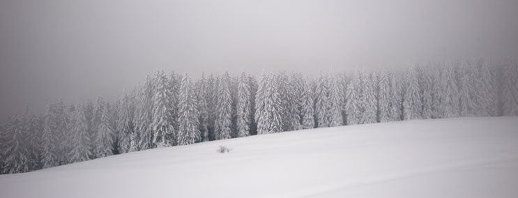 Snow covers a forest along the trail from the Höllenbachtal to the Aueralm at lake Tegernsee in Bavaria, Friday, February 10, 2012.