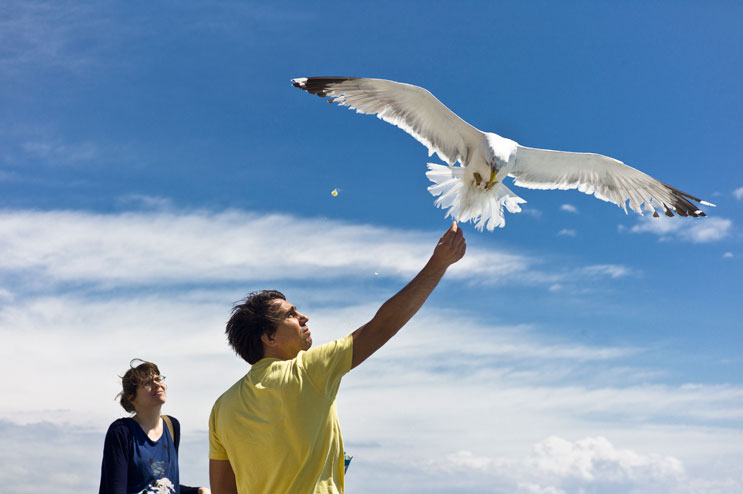 Florian Peljak and Corinna Vermeersch feed the sea gulls on the ferry from Piombino to Porto Ferraio, Elba, Sunday, May 13, 2012.