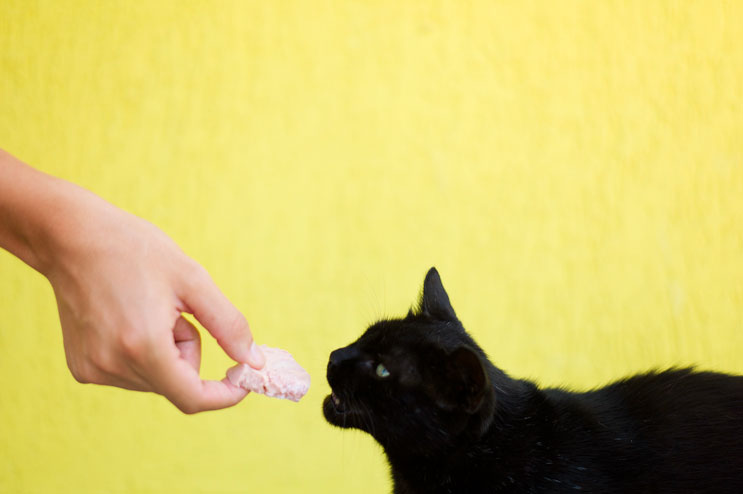 Family friend Caius Ratiu feeds the cat Pamela at Calin's home in Targu Mures. Friday, July 6, 2012.