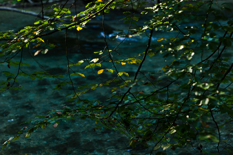 The last sun rays hit the leaves of a beech tree by the Mangfall river near Hohendilching, Sunday, September 9, 2012.
