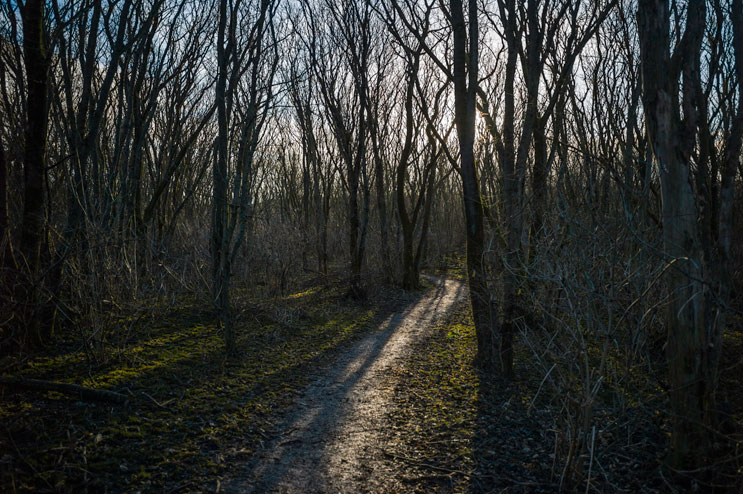 The trail winds through a forest on the southern part of Sylt. With all the leaves gone, the trees look almost skeletal. Wednesday, December 4, 2013.